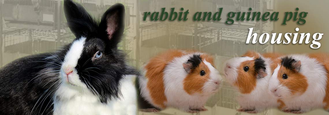 rabbit-guinea-pig-research-cages